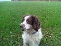 Dog Walker Available For Finedon And Irthlingborough Only.