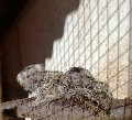 For Sale Marmosets: After Haveing had a Baby Marmosets Boom