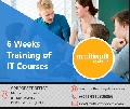 6 Weeks Training of IT Courses