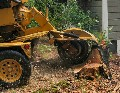 Stump Grinding Gloucestershire