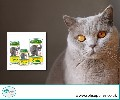 Shop Herbal Parasite Control for Cat Online in UK | SPH Supplies