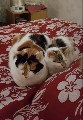 Reluctant sale of two cats in Coventry